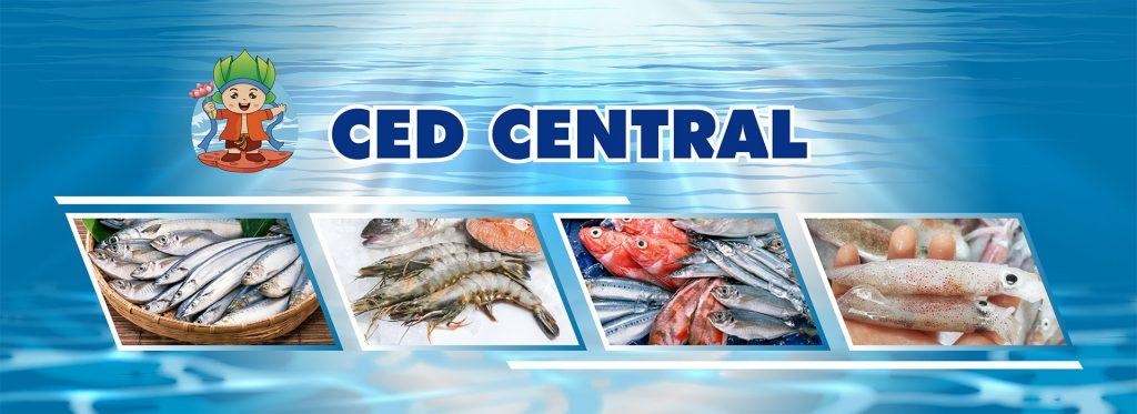 Hoàn thành dự án thiết kế website cho CED CENTRAL